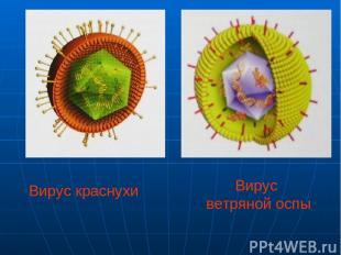 Вирус ветряной оспы Вирус краснухи