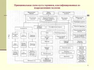 * Принципиальная схема куста терминов, классифицированных по подразделениям экол