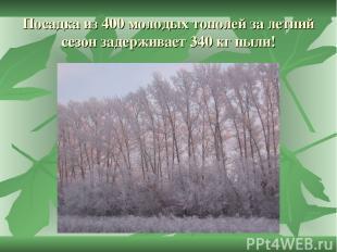 Посадка из 400 молодых тополей за летний сезон задерживает 340 кг пыли!