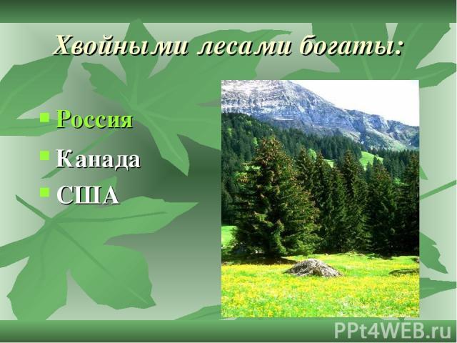 Хвойными лесами богаты: Россия Канада США