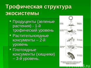 Трофическая структура экосистемы Продуценты (зеленые растения) - 1-й трофический