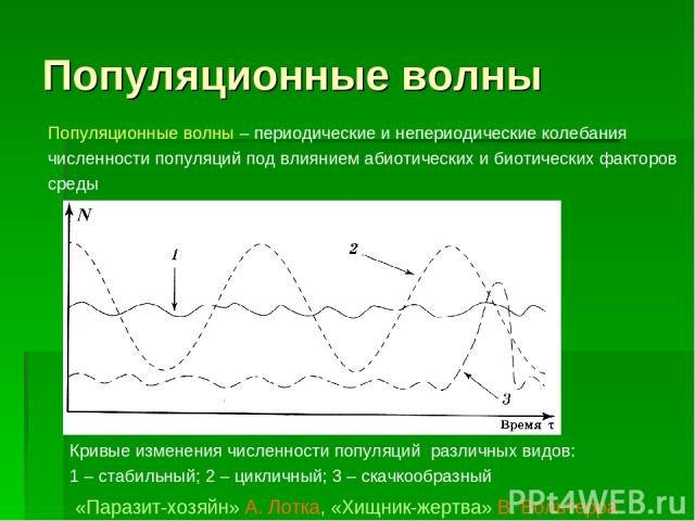 Популяционные волны Кривые изменения численности популяций различных видов: 1–стабильный; 2 – цикличный; 3 – скачкообразный «Паразит-хозяйн» А. Лотка, «Хищник-жертва» В. Вольтерра Популяционные волны – периодические и непериодические колебания чис…