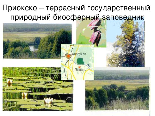 Приокско-террасный биосферный заповедник чем знаменит и где находится