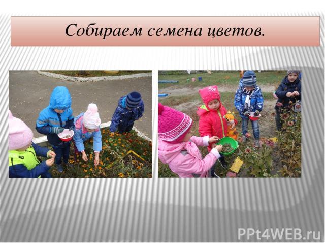 Собираем семена цветов.