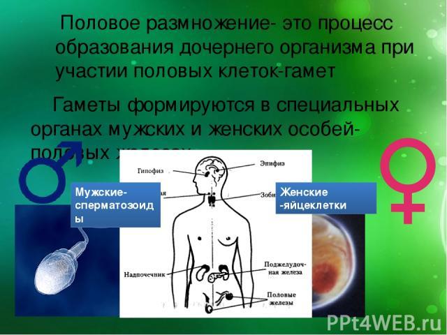 smotret-porno-s-sekretarshey-v-chulkah