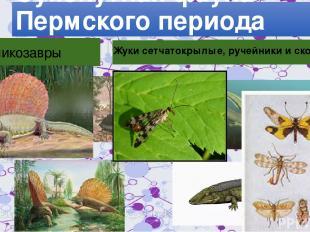 Сухопутная фауна Пермского периода Пеликозавры Рептилморфы Жуки сетчатокрылые, р