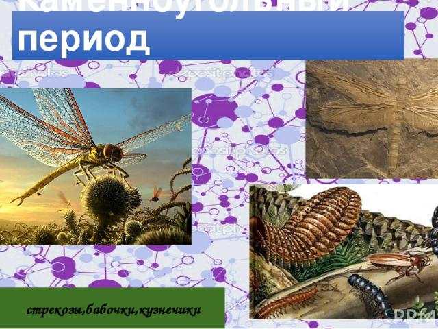 стрекозы,бабочки,кузнечики Первопроходцы в воздухе Каменноугольный период