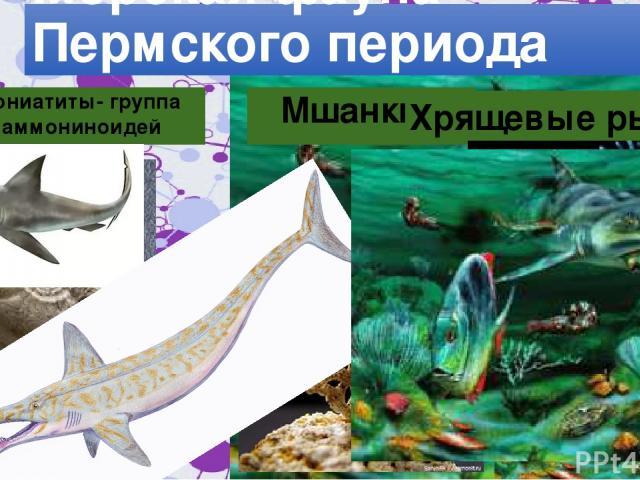 Морская фауна Пермского периода Гониатиты- группа аммониноидей Мшанки Хрящевые рыбы