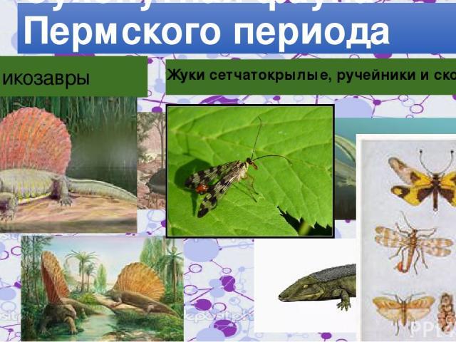 Сухопутная фауна Пермского периода Пеликозавры Рептилморфы Жуки сетчатокрылые, ручейники и скорпионницы