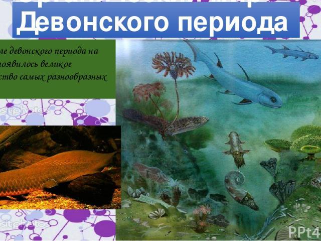 Органический мир Девонского периода В начале девонского периода на Земле появилось великое множество самых разнообразных рыб.