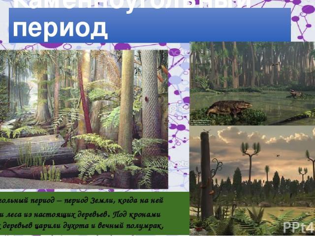Леса Каменноугольный период Каменноугольный период – период Земли, когда на ней зазеленели леса из настоящих деревьев. Под кронами громадных деревьев царили духота и вечный полумрак.