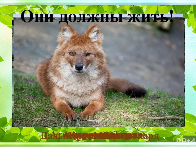 Они должны жить! Амурский горал Атлантический морж Манул Дальневосточный леопард Амурский тигр. Красный волк