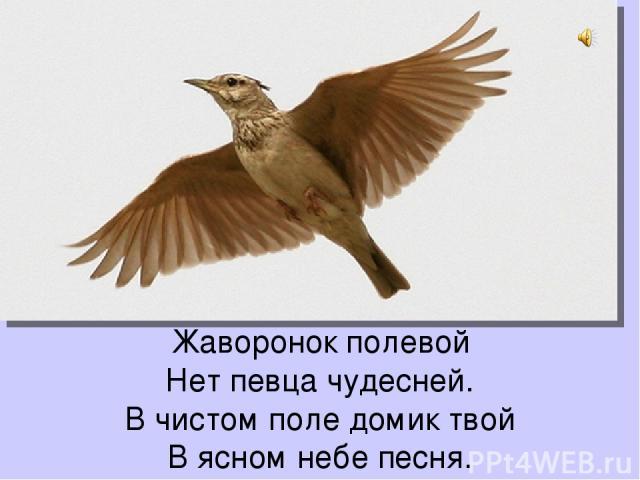 Жаворонок полевой Нет певца чудесней. В чистом поле домик твой В ясном небе песня.