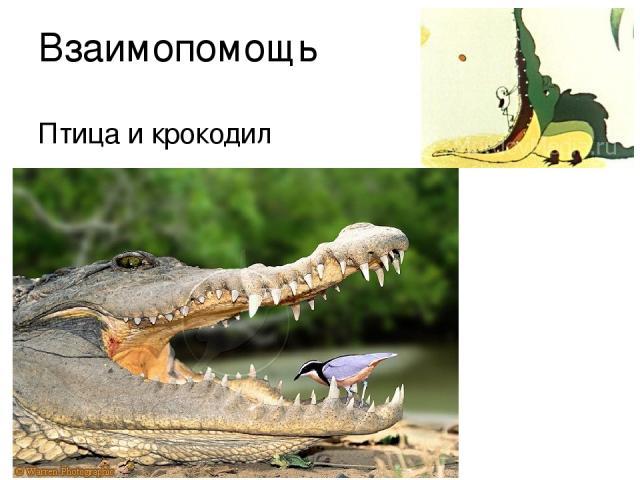 Взаимопомощь Птица и крокодил