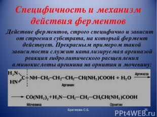 Специфичность и механизм действия ферментов Действие ферментов, строго специфичн