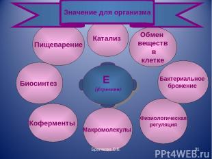 Физиологическая регуляция Пищеварение Е (ферменты) Биосинтез Коферменты Макромол