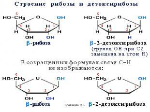 Братякова С.Б. * Братякова С.Б.
