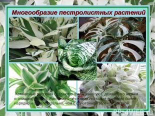 Многообразие пестролистных растений Комнатные растения создают в помещении уют,