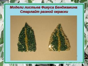 Модели листьев Фикуса Бенджамина Старлайт разной окраски Модель листа пёстрой ок