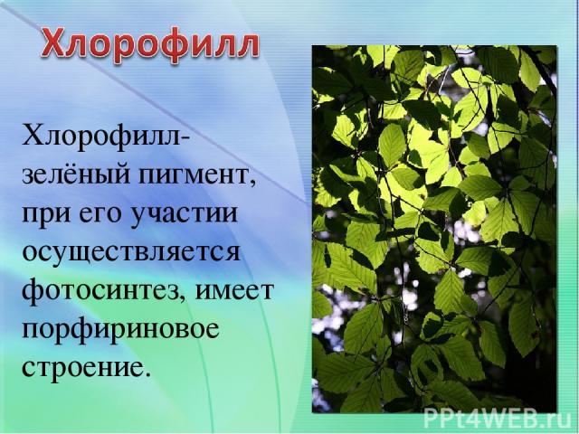 Хлорофилл- зелёный пигмент, при его участии осуществляется фотосинтез, имеет порфириновое строение.