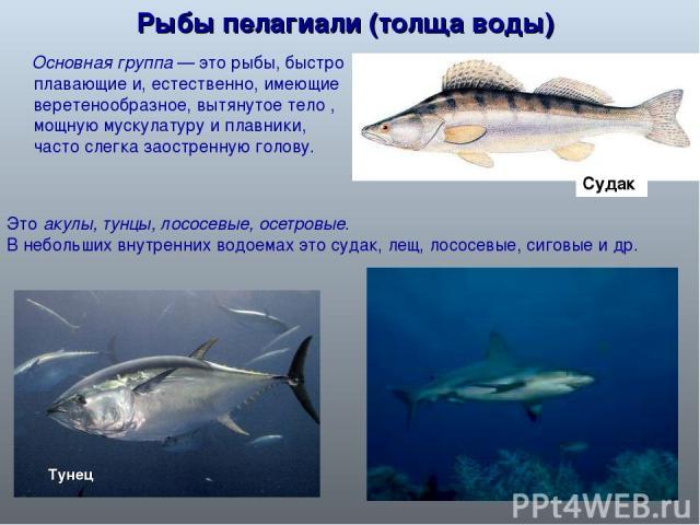 Почему рыбы плавают на поверхности воды в аквариуме