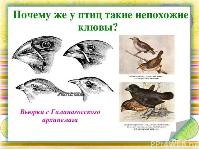 Объясните связь между строением клюва каждой птицы и особенностями её питания