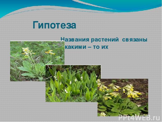 Название связанное с растениями