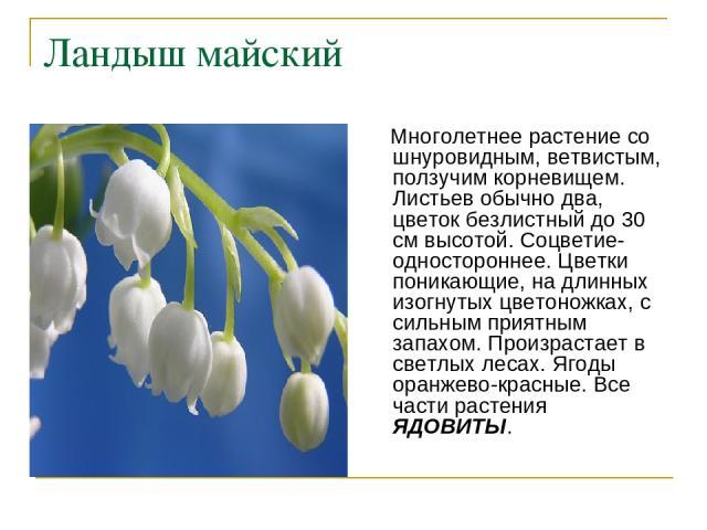 Растения-первоцветы - презентация к уроку Окружающий мир