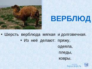 ВЕРБЛЮД Шерсть верблюда мягкая и долговечная. Из неё делают: пряжу, одеяла, плед