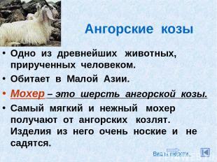 Ангорские козы Одно из древнейших животных, прирученных человеком. Обитает в Мал