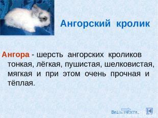 Ангорский кролик Ангора - шерсть ангорских кроликов тонкая, лёгкая, пушистая, ше
