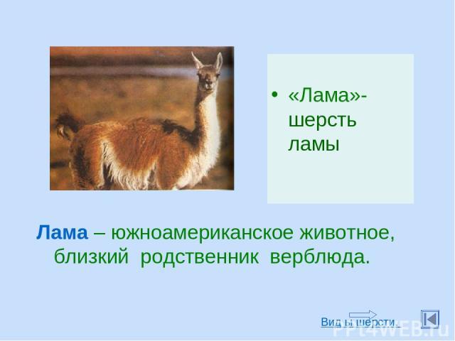 «Лама»-шерсть ламы Лама – южноамериканское животное, близкий родственник верблюда. Вид ы шерсти.