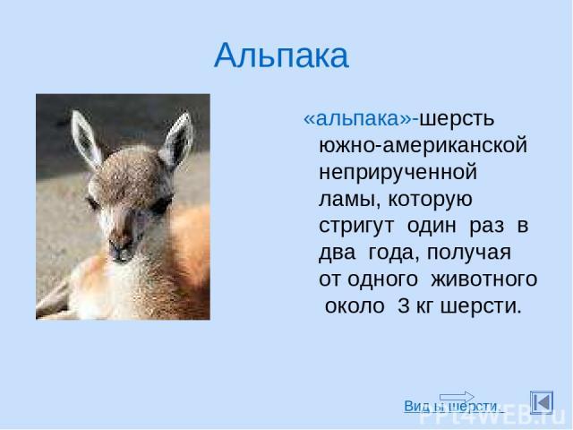 Альпака «альпака»-шерсть южно-американской неприрученной ламы, которую стригут один раз в два года, получая от одного животного около 3 кг шерсти. Вид ы шерсти.