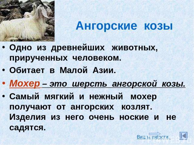 Ангорские козы Одно из древнейших животных, прирученных человеком. Обитает в Малой Азии. Мохер – это шерсть ангорской козы. Самый мягкий и нежный мохер получают от ангорских козлят. Изделия из него очень ноские и не садятся. Вид ы шерсти.