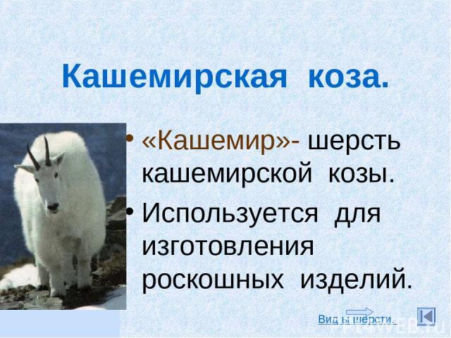 Кашемирская коза. «Кашемир»- шерсть кашемирской козы. Используется для изготовления роскошных изделий. Вид ы шерсти.
