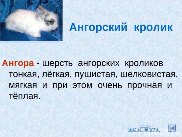 Ангорский кролик Ангора - шерсть ангорских кроликов тонкая, лёгкая, пушистая, шелковистая, мягкая и при этом очень прочная и тёплая. Вид ы шерсти.