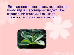 Все растение очень ядовито, особенно много яда в шаровидных ягодах. При отравл