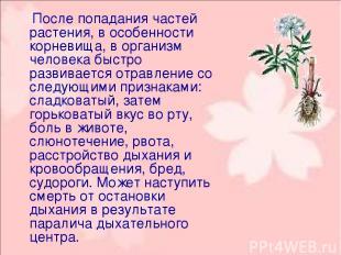 После попадания частей растения, в особенности корневища, в организм человека бы