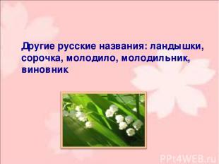 Другие русские названия: ландышки, сорочка, молодило, молодильник, виновник