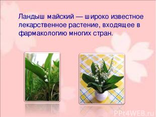 Ландыш майский— широко известное лекарственное растение, входящее в фармакологи