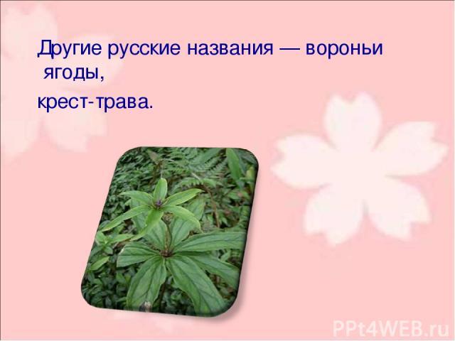 Другие русские названия— воро ньи я годы, крест-трава .