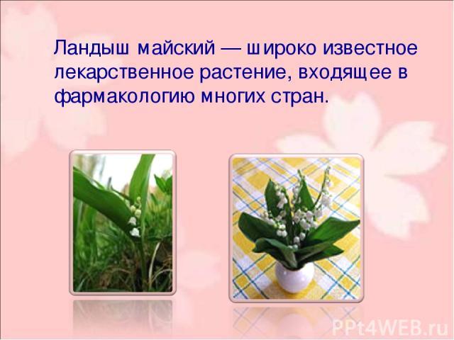 Ландыш майский— широко известное лекарственное растение, входящее в фармакологию многих стран.