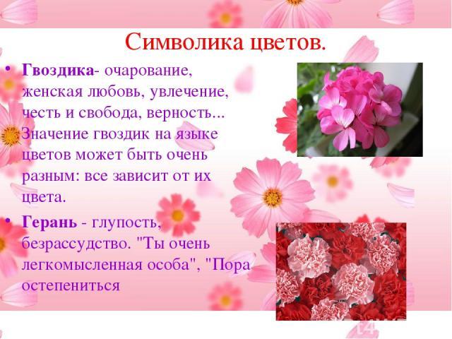 Цветок гвоздика описание и