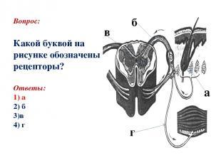 Вопрос: Какой буквой на рисунке обозначены рецепторы? Ответы: 1) а 2) б 3)в 4) г