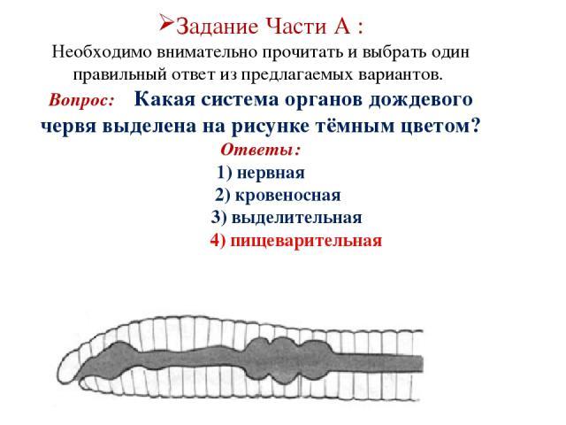 Задание Части А : Необходимо внимательно прочитать и выбрать один правильный ответ из предлагаемых вариантов. Вопрос: Какая система органов дождевого червя выделена на рисунке тёмным цветом? Ответы: 1) нервная 2) кровеносная 3) выделительная 4) пище…