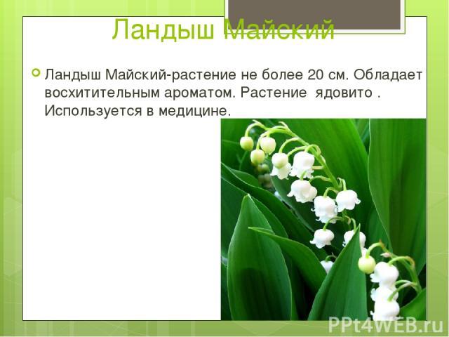 """Презентация на тему """"Лилейные растения"""" - скачать бесплатно презентации по Биологии"""