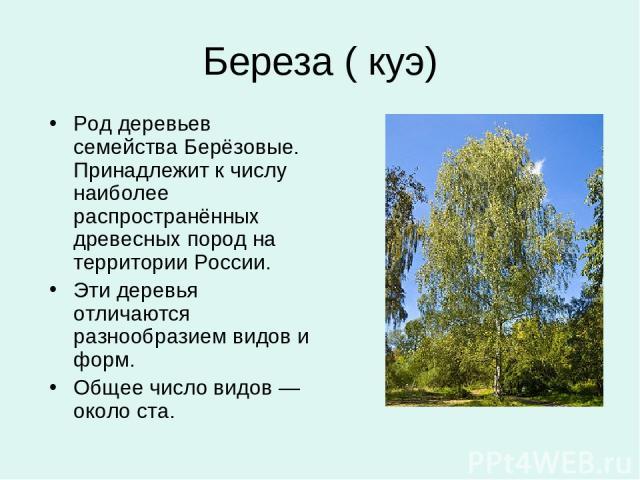 Дивовижні дерева на планеті земля