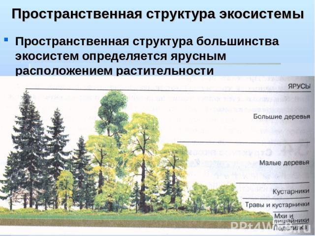Экосистема Презентация 11 Класс