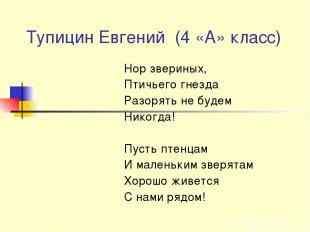 Тупицин Евгений (4 «А» класс) Нор звериных, Птичьего гнезда Разорять не будем Ни