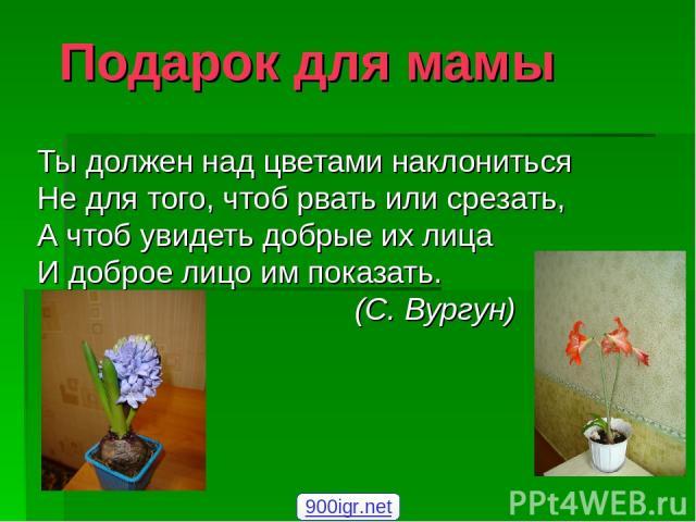 луковичные цветы презентация